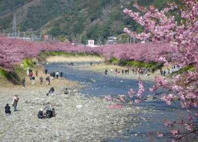 18河川敷の桜並木.jpg