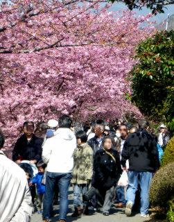 19川沿いの桜の回廊.jpg