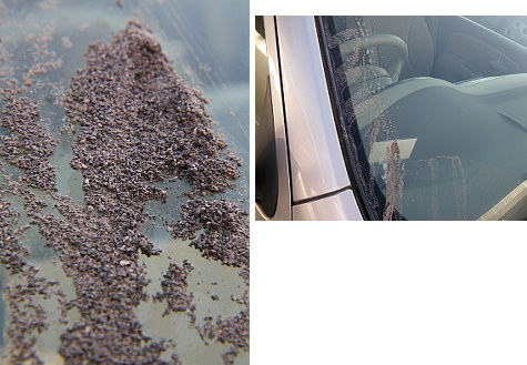 車の窓についた火山灰.jpg